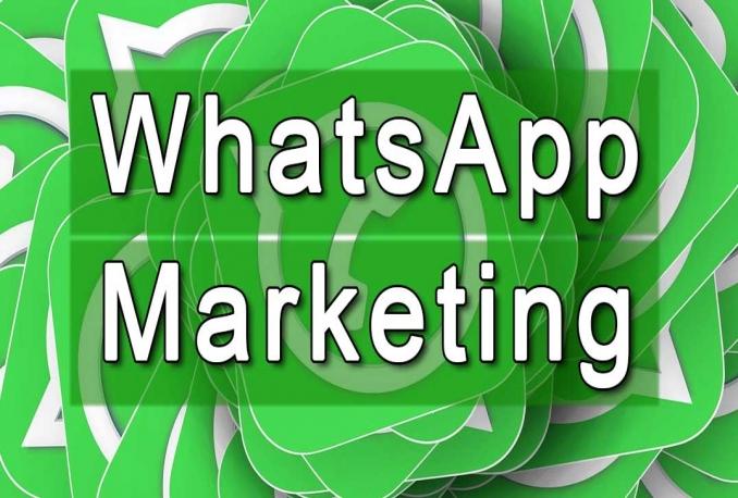 provide Bulk WhatsApp SMS Sending + Filtering Software